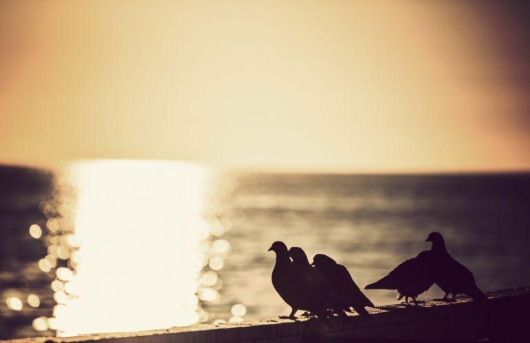 animals birds silhouette sea wallpaper