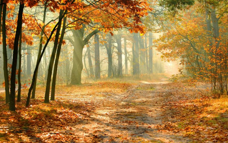 landscape forest wallpaper