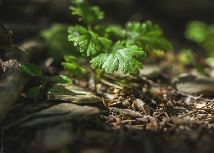 plants macro wallpaper