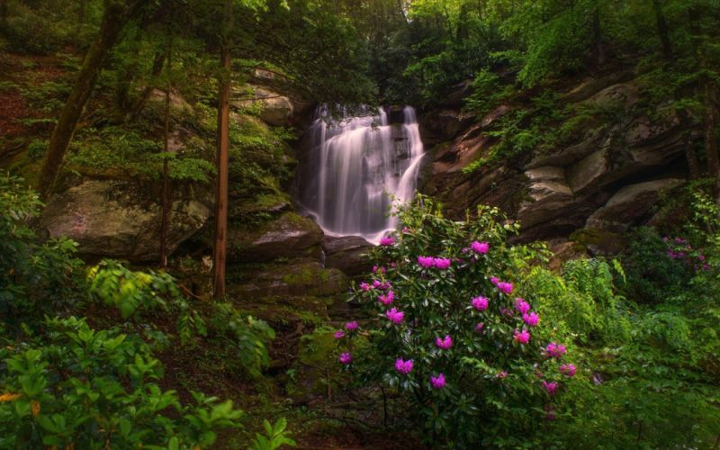 river forest plants waterfall wallpaper
