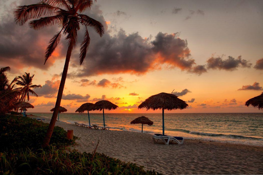 sea beach palm trees tropical Sun wallpaper