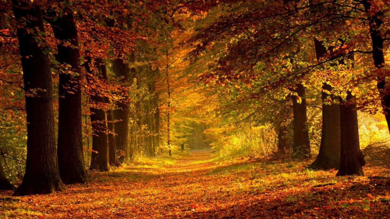 Path though forest tree  wallpaper