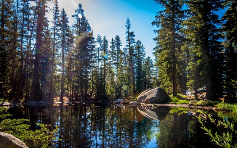 Forest lake tree rock nature wallpaper