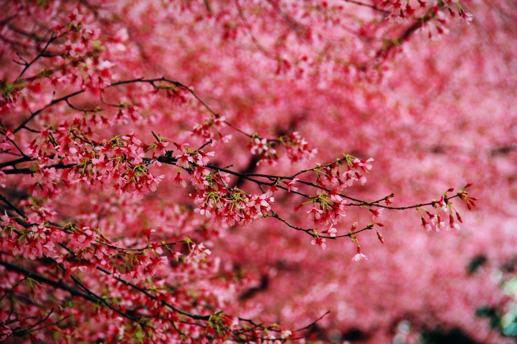 Blossom Flowers Retina wallpaper
