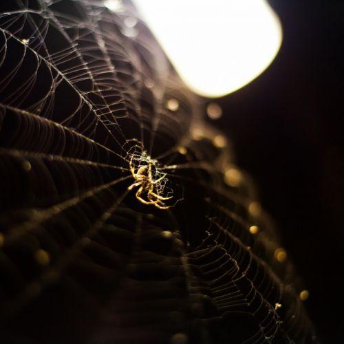 Nature Spider Web wallpaper