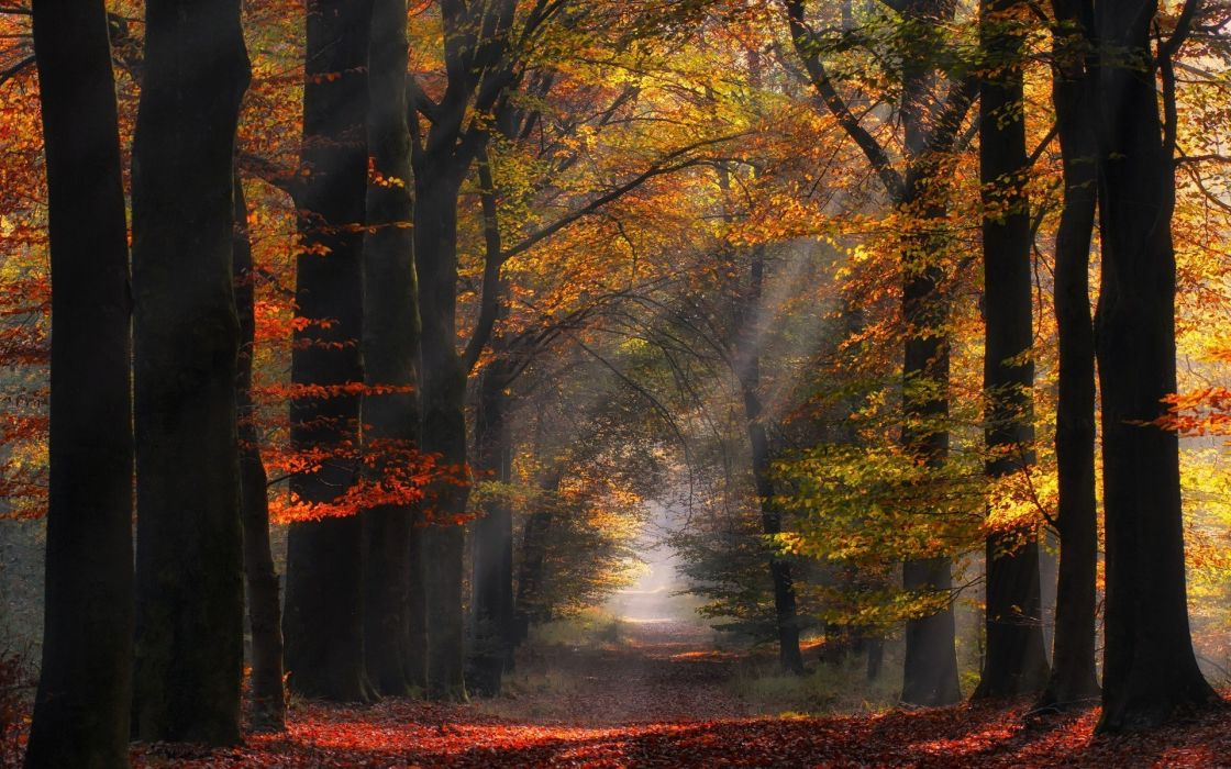 morning Nature Path Sun Rays Landscape Netherlands Trees Sunlight Forest Leaves Mist Atmosphere Fall wallpaper