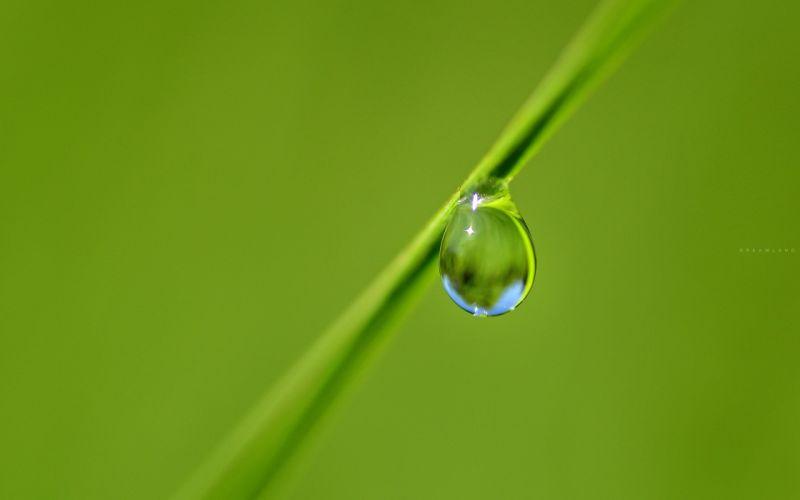 gota agua planta naturaleza wallpaper