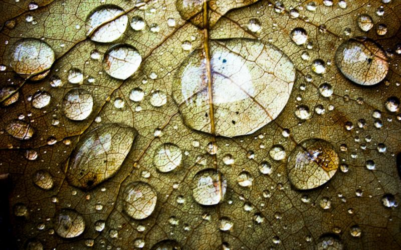 gotas agua hoja seca wallpaper