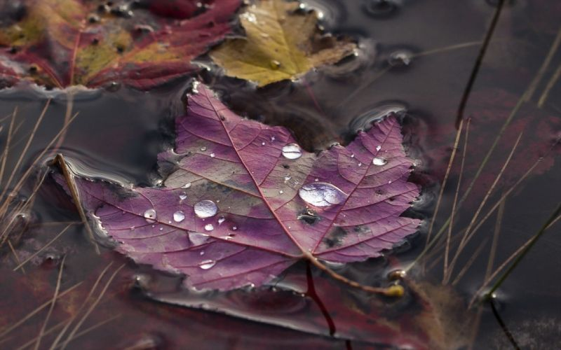gotas lluvia hoja seca naturaleza wallpaper