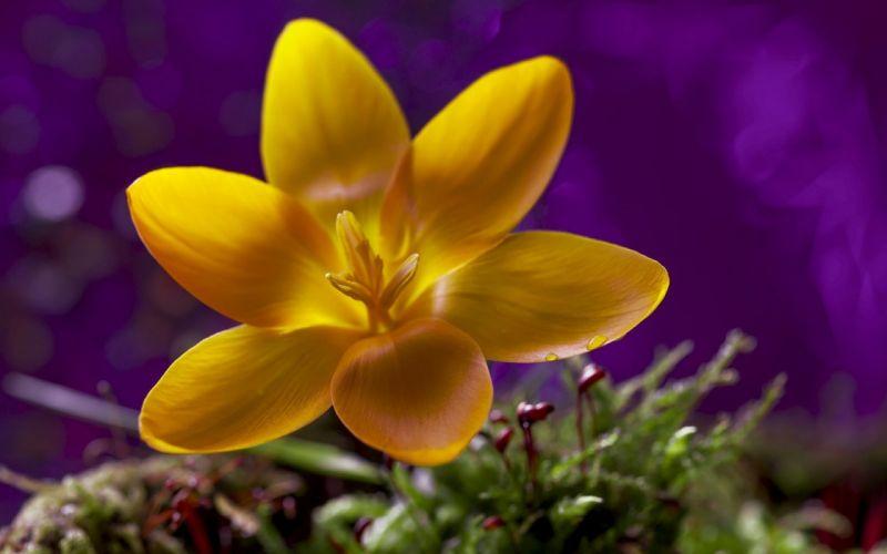 flor amarilla naturaleza wallpaper