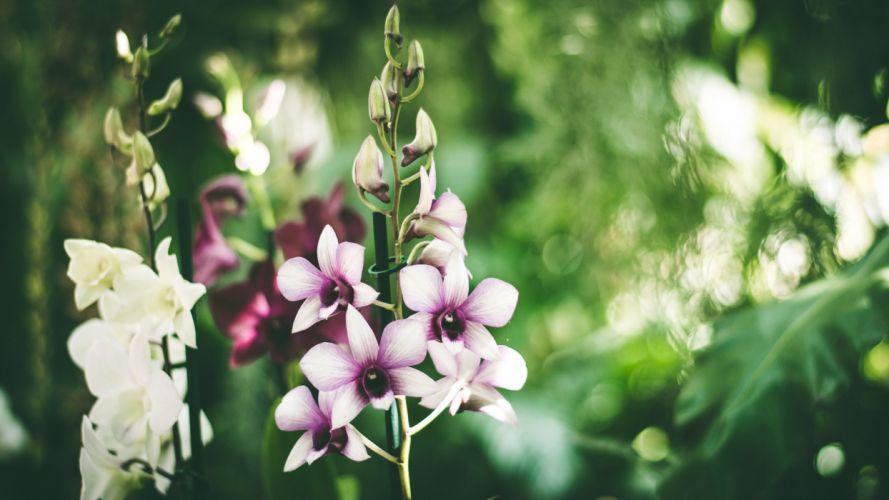 flores blancas moradas naturaleza wallpaper