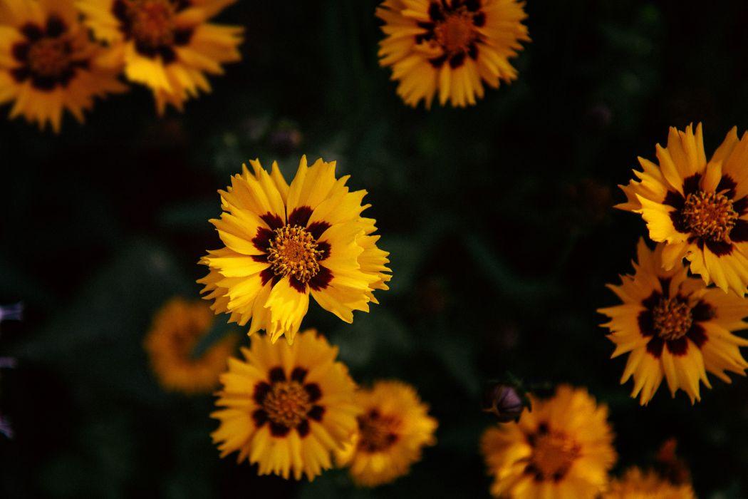 flores amarillas natutaleza wallpaper