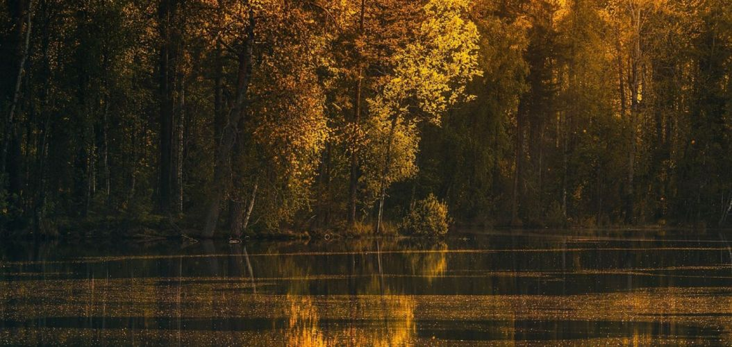photography landscape nature lake forest fall trees wallpaper