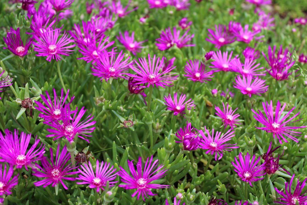 flores violetas naturaleza wallpaper