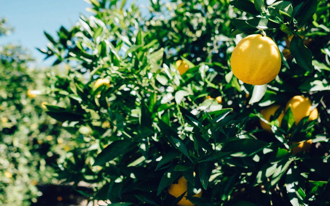 naturaleza frutas pomelos wallpaper