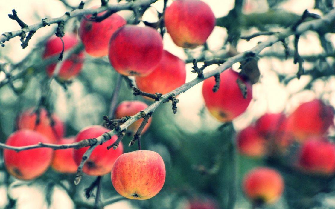 manzanas frutas naturaleza wallpaper