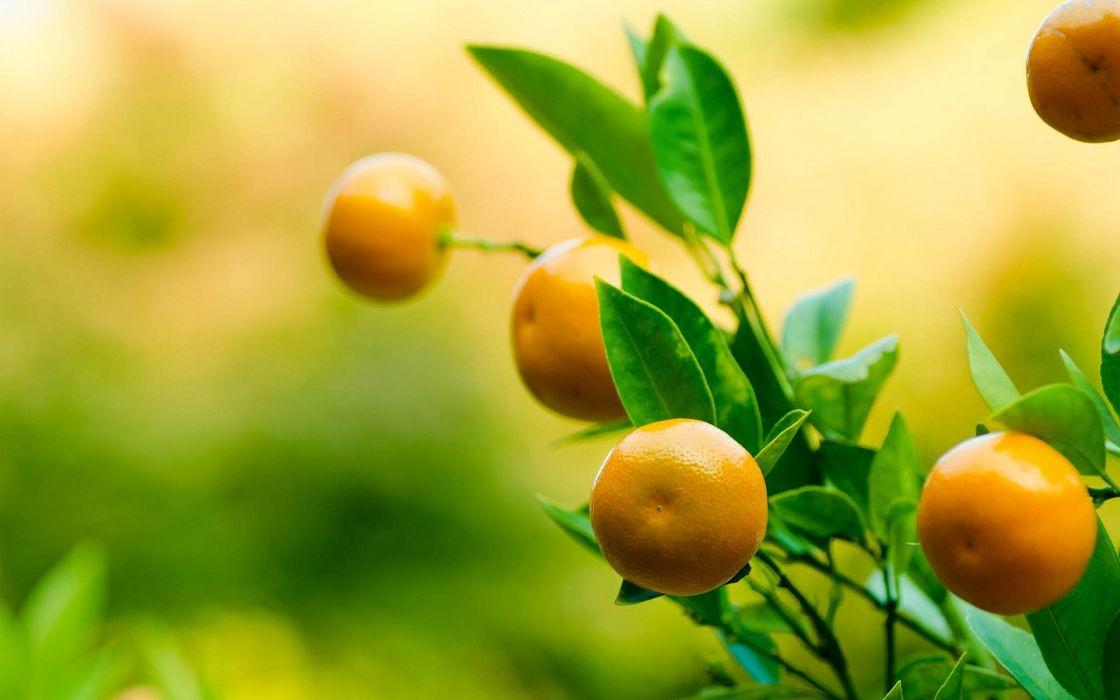 frutas mandarinas naturaleza citricos wallpaper