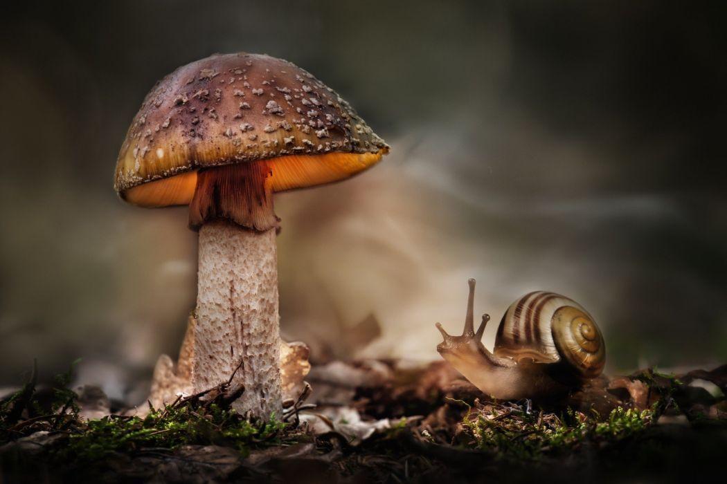 macros nail mushroom wallpaper