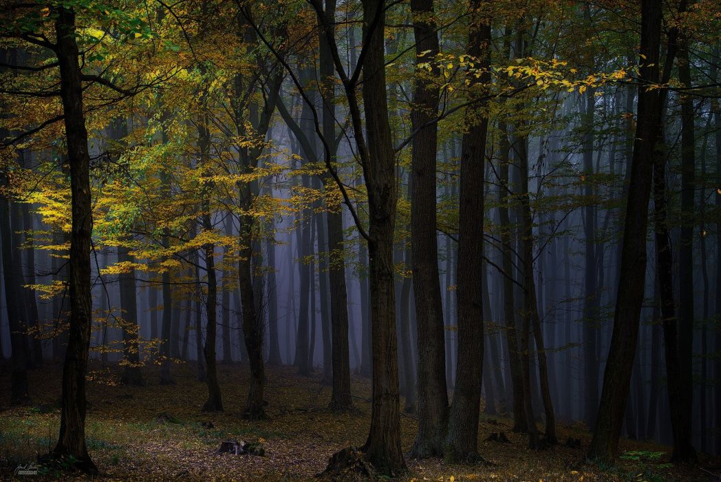 nature landscape photography forest dark trees wallpaper
