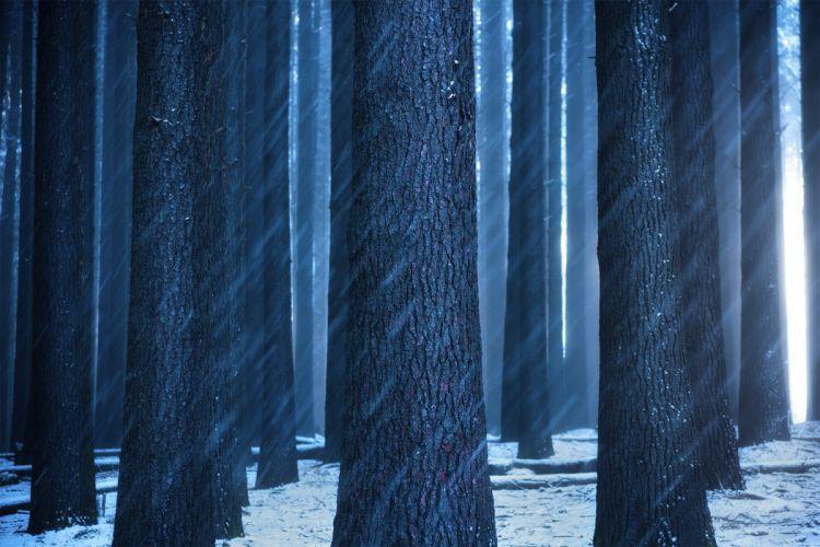 nature landscape trees dark snow wallpaper