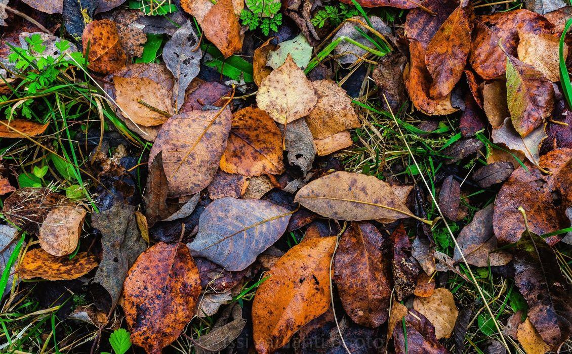 nature leaves autumn wallpaper