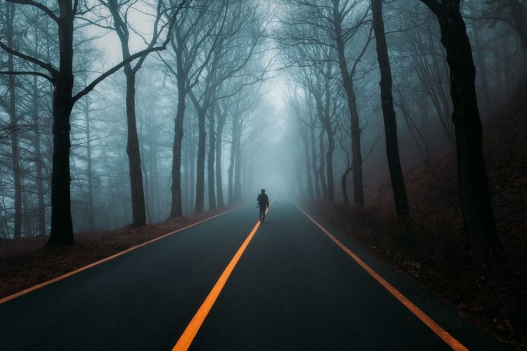 people road fog nature forest wallpaper