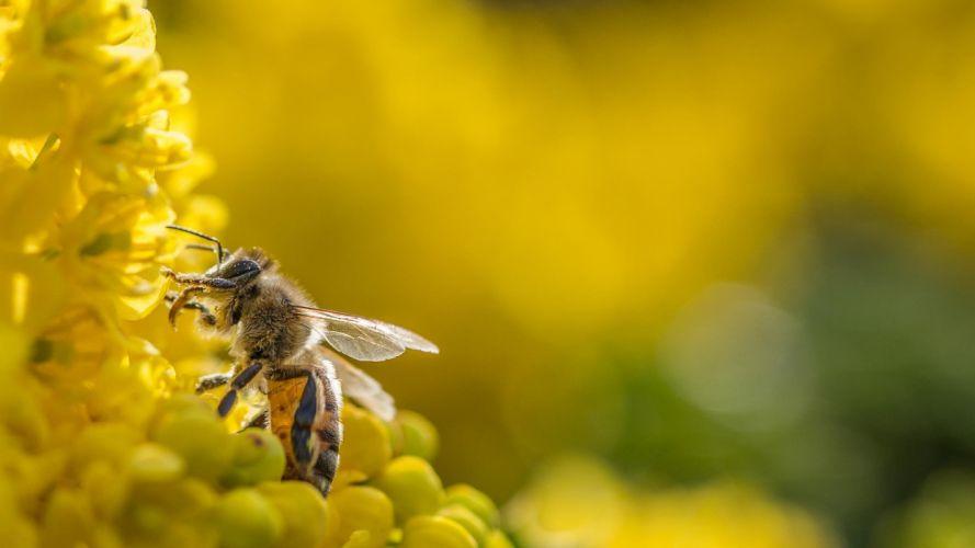 photography macro depth of field flowers bees bokeh wallpaper
