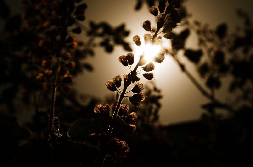 photography macro depth of field flowers sunlight wallpaper