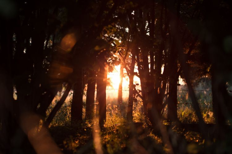 sunlight trees flares fence plants grass wallpaper