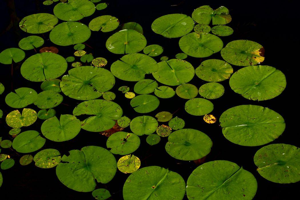 leaves-pond-sea-152 wallpaper