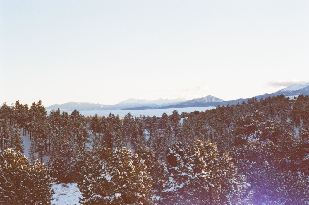 forest-snow-trees-2582 wallpaper