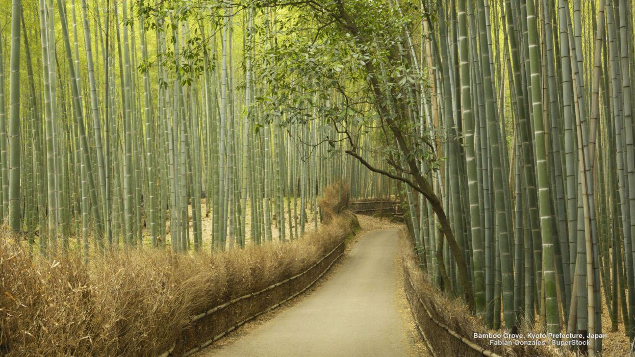 Bamboo Grove Kyoto Prefecture Japan wallpaper