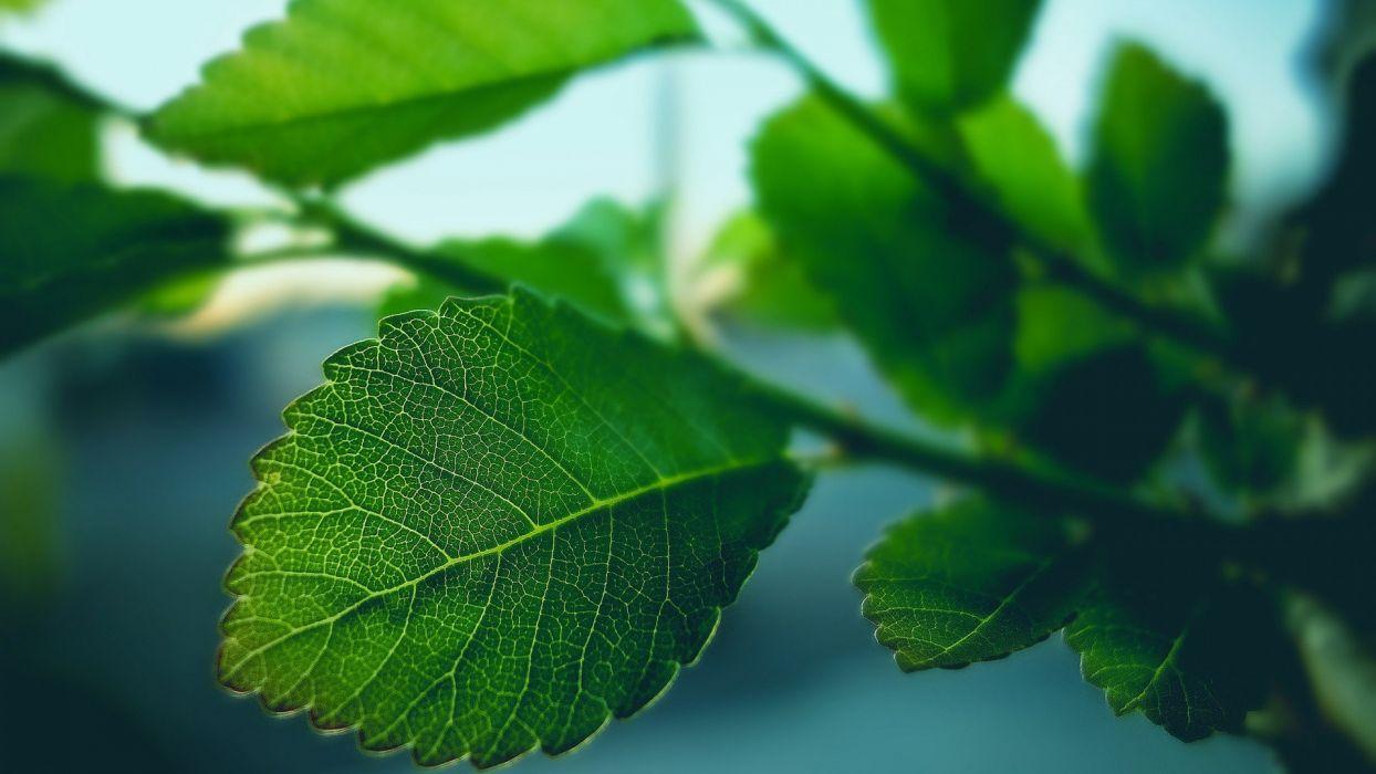naturaleza hojas verdes wallpaper