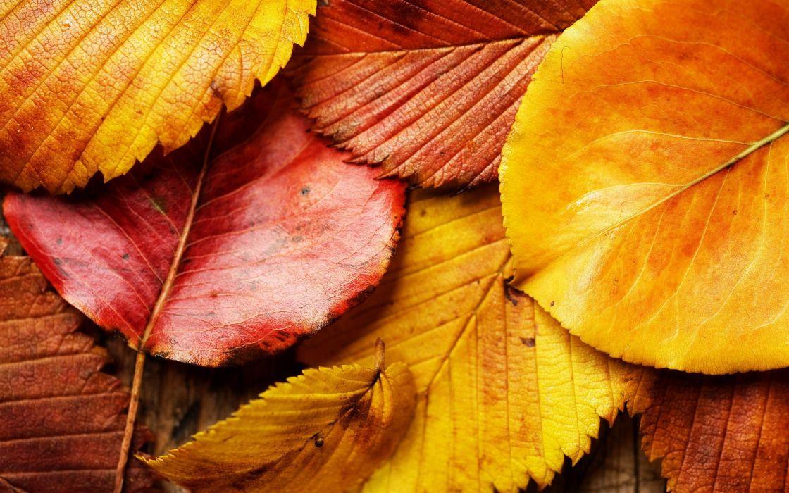 hojas secas amarillas naturaleza wallpaper