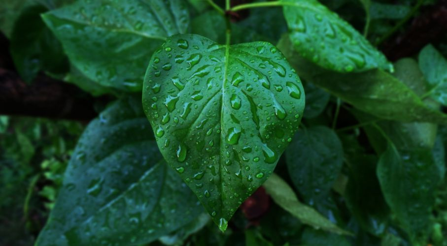 hoja planta agua naturaleza wallpaper