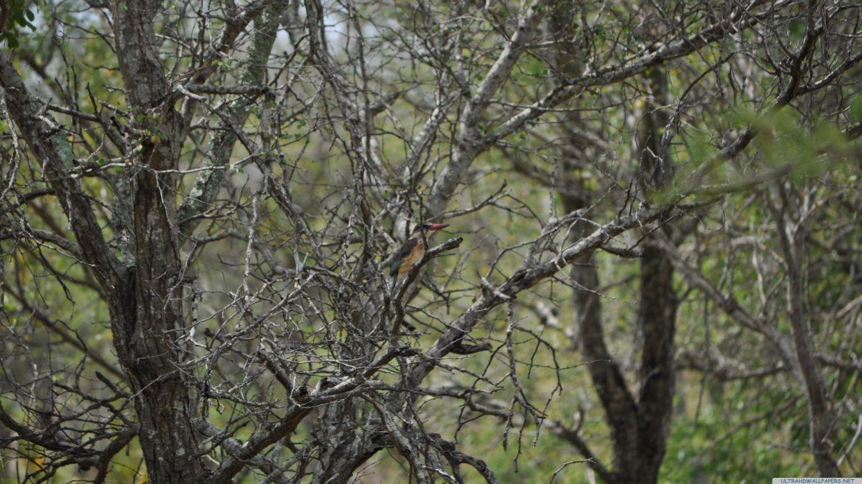 woodpecker 2-3840x2160 wallpaper