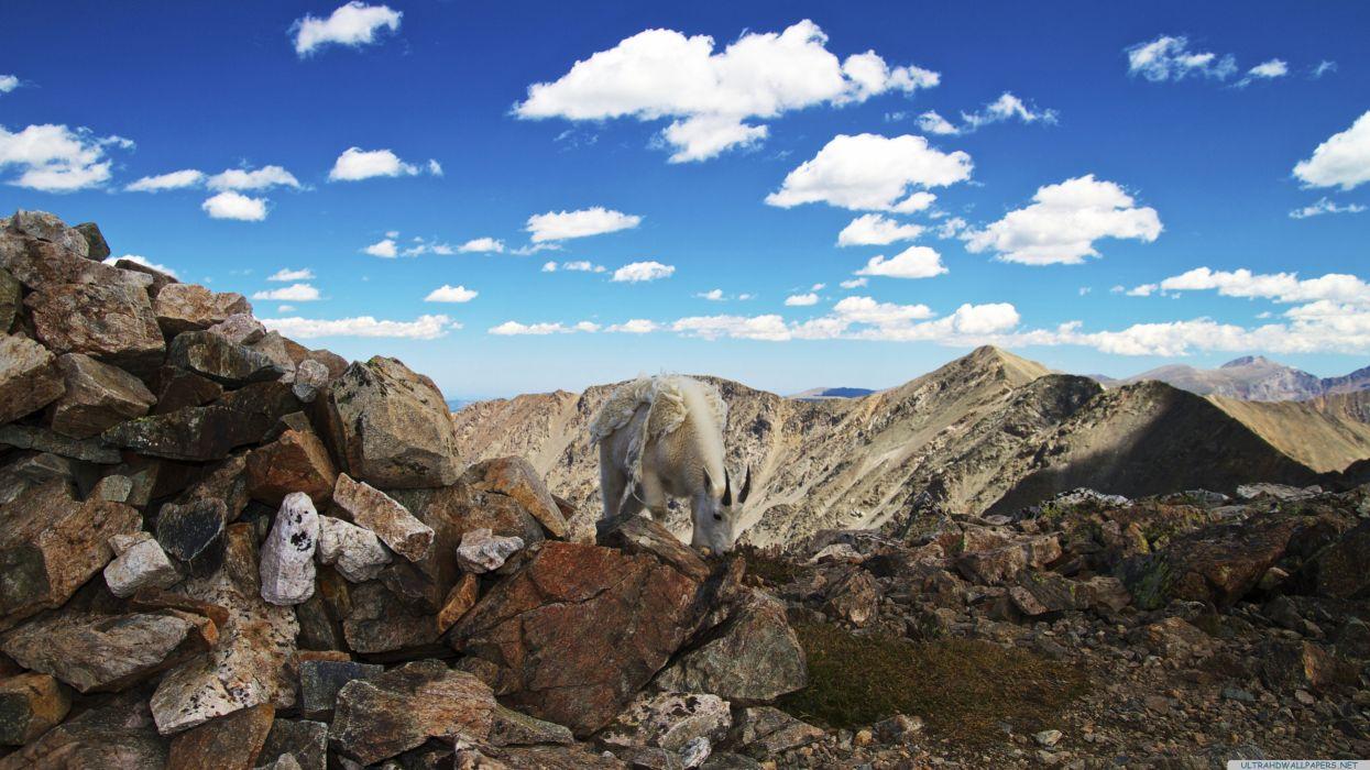 colorado mountain goat-3840x2160 wallpaper