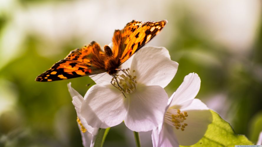 butterfly and flowers-3840x2160 wallpaper