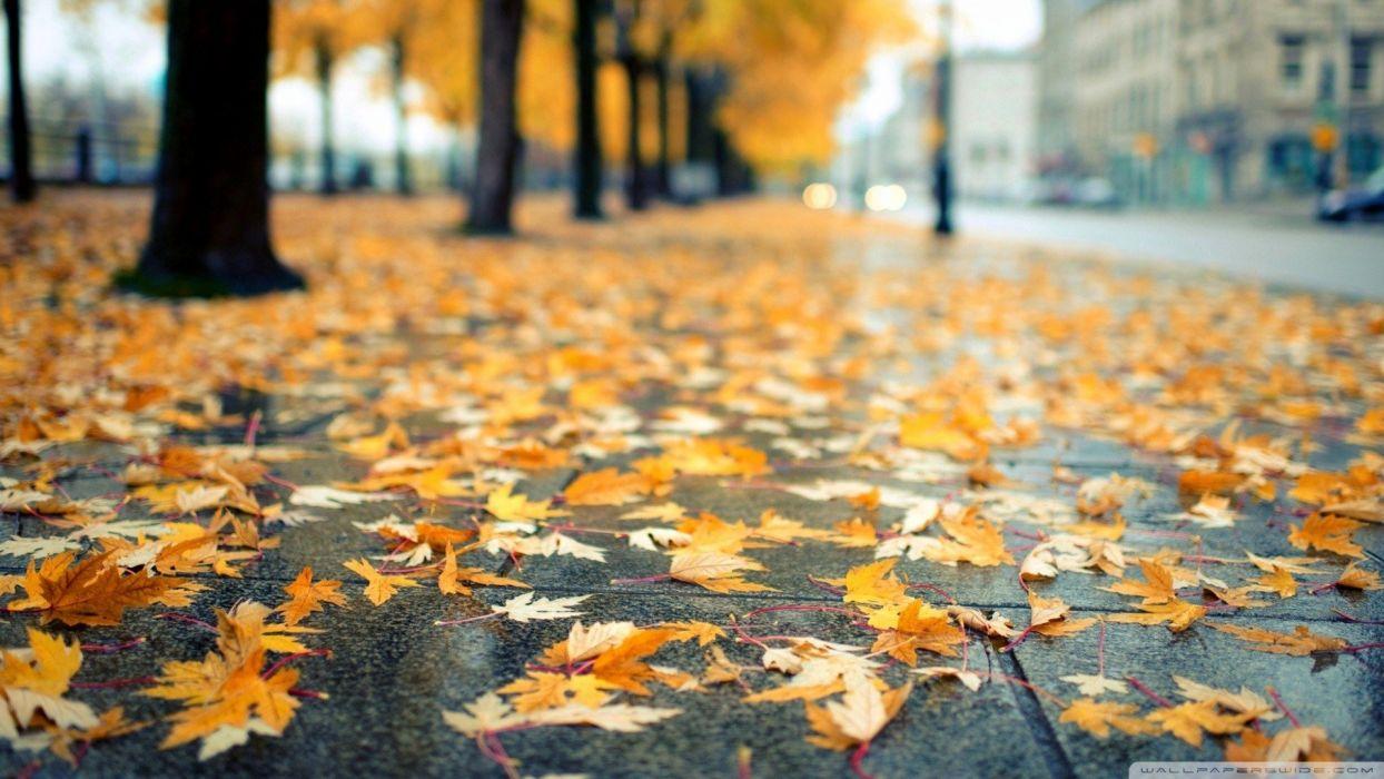hojas secas suelo otoy wallpaper