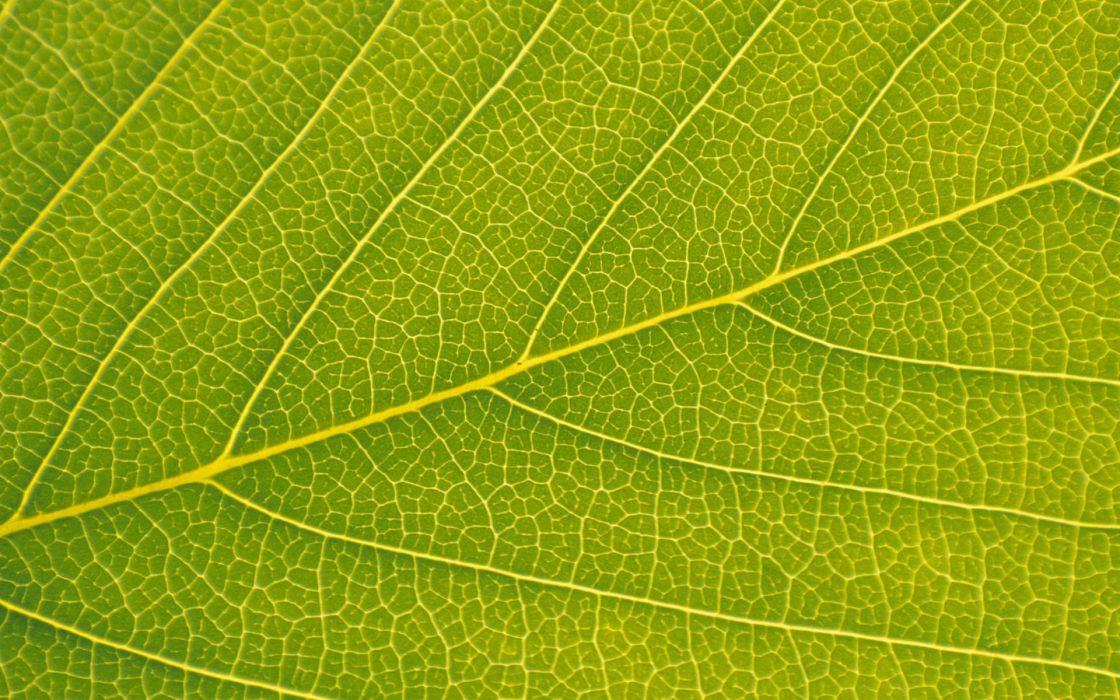 hoja verde naturaleza wallpaper