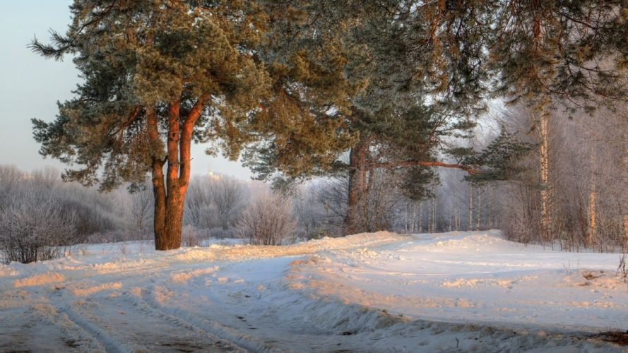 landscape Morning nature photography road russia Shrubs snow sunlight Trees winter wallpaper