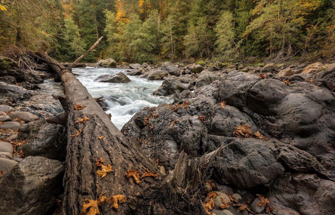 landscape river tree autumn forest wallpaper