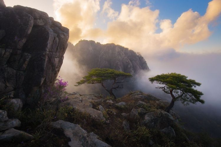 cliff clouds landscape mist mountains nature photography South Korea Spring sunset Trees wallpaper