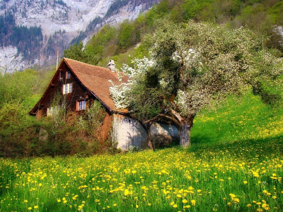 Cottage flowers landscape mountains nature photography Shrubs Spring Swiss Alps Trees wallpaper