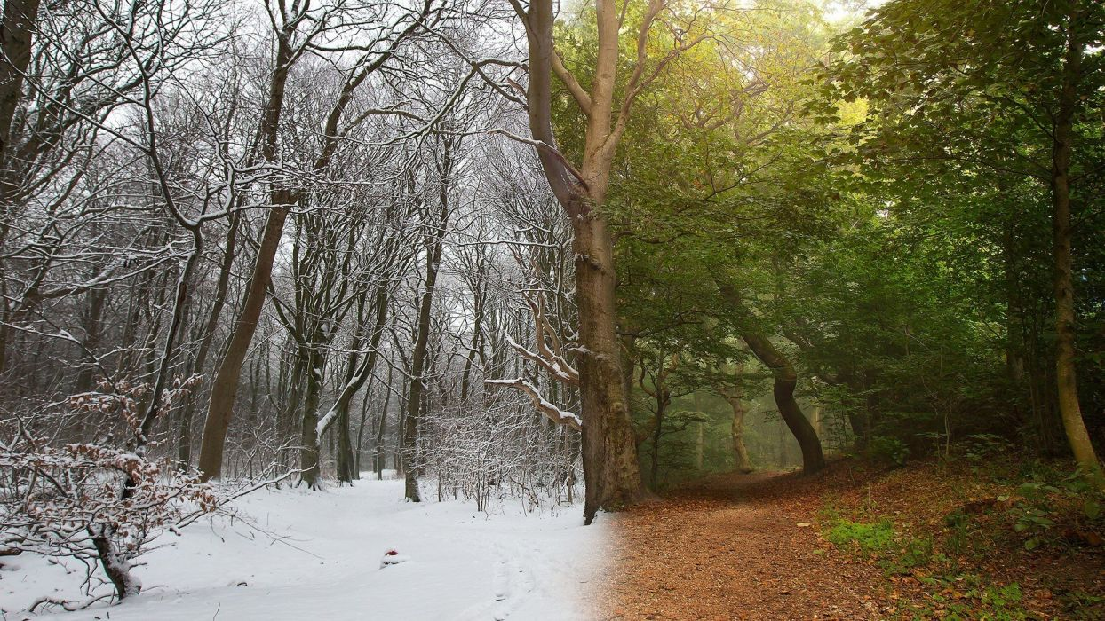 branch Dirt Road forest landscape leaves nature Photo Manipulation Photoshopped snow wallpaper