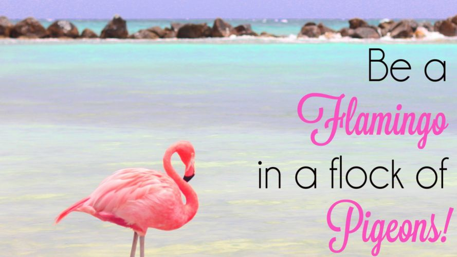 36030391-flamingo-wallpaper wallpaper