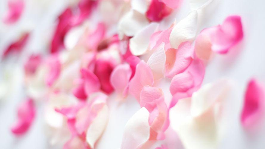 36384707-pink-flower-wallpaper wallpaper