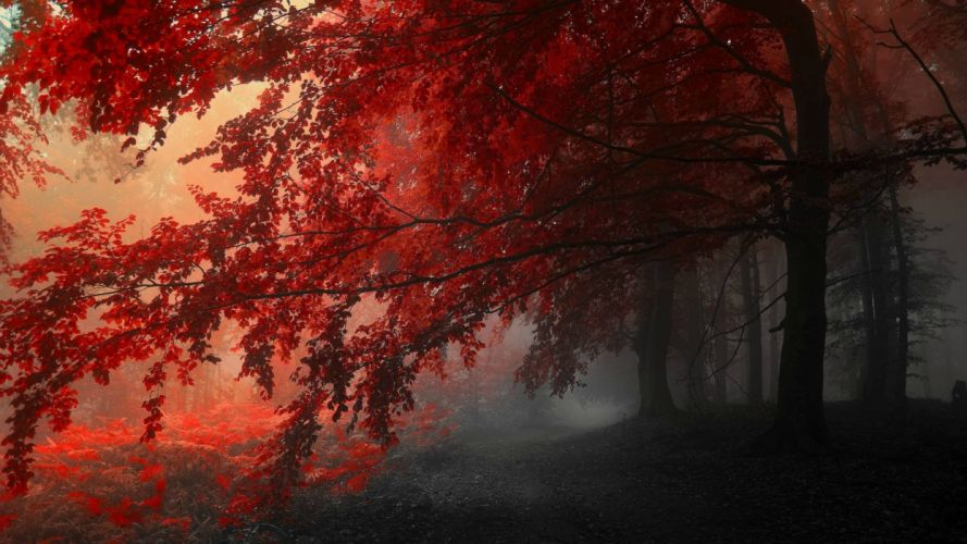 36362298-red-pictures wallpaper