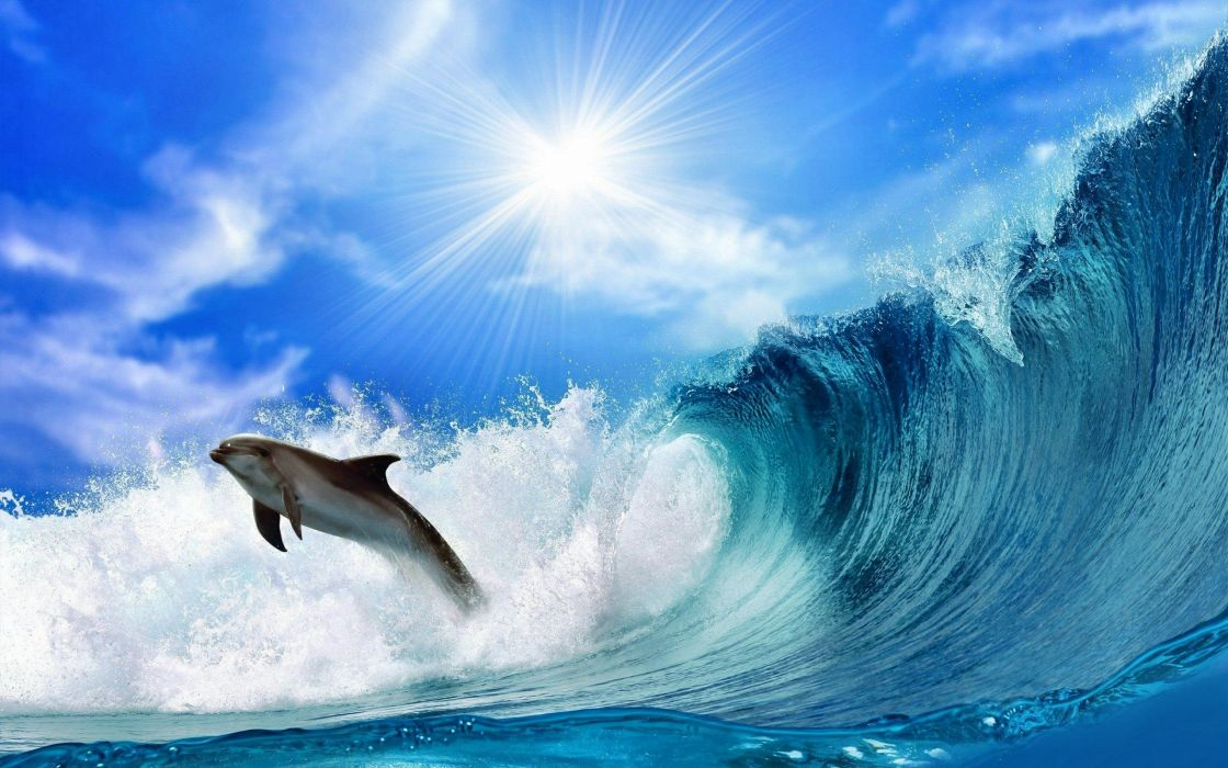 35883533-dolphin-wallpaper wallpaper