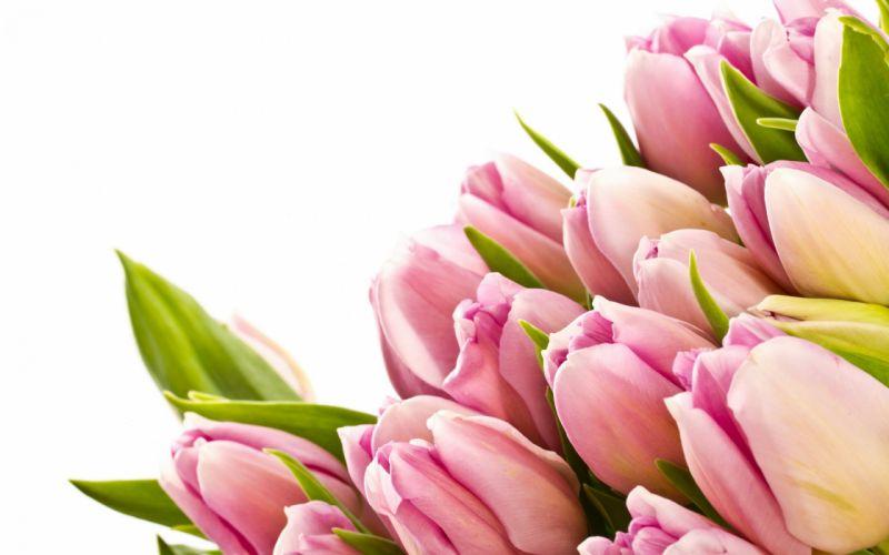 35930809-tulips-wallpaper wallpaper